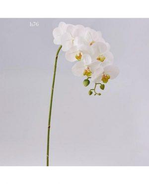 Orchidea Bianca h76