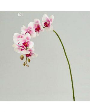 Orchidea lilla h76