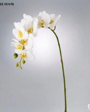 Orchidea Ramo 9 Fiori h76